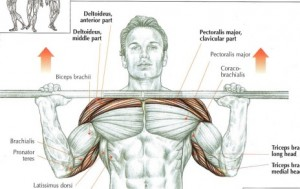 best exercise for upper body