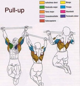 best upper body building exercise